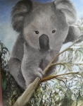 Koala al oleo