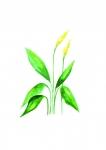 Pathos Leaf