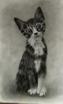 retrato felino