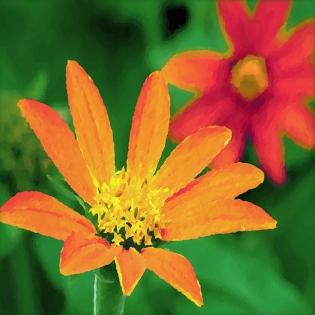 Cuadros flores cuadrados