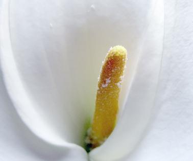 Cuadro flor blanca (bme011801)