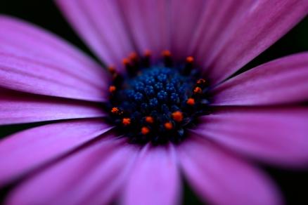Cuadro flor lila (bme013003)