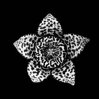 Cuadro flor blanco y negro (bme170042)