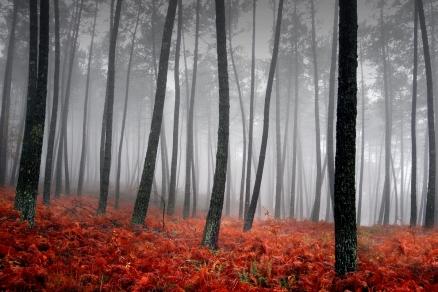 Cuadro bosque (bme180102)