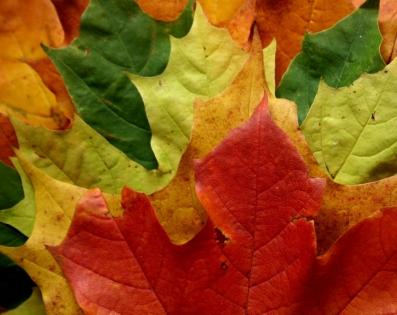Cuadro hojas (bme190023)