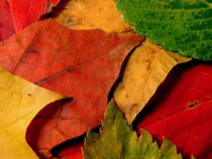 Cuadro hojas (bme190024)
