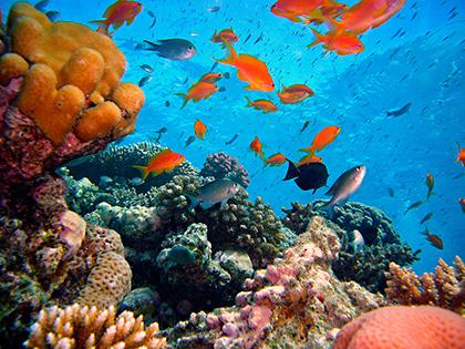 Cuadro fondo marino (bpx0210)