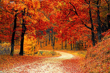 Cuadro arboles en otoño (bpx0322)