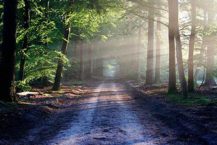 Cuadro camino en el bosque (bpx0324)