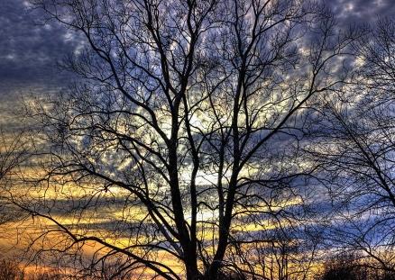 Cuadro arbol y cielo (bpx0335)
