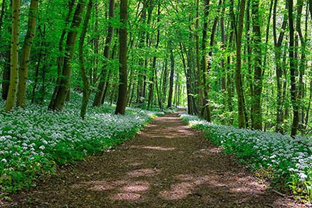 Cuadro camino en el bosque (bpx0314)