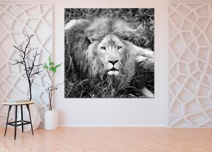 Cuadro leon (bgca0043)