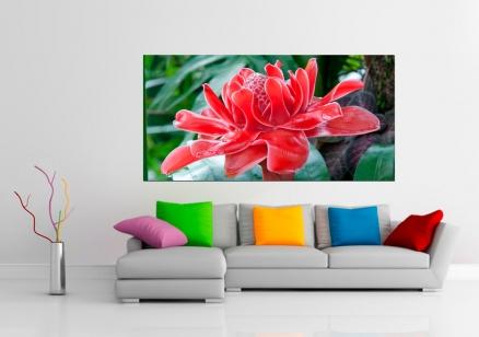 Cuadro flor especial roja (bgca0080)