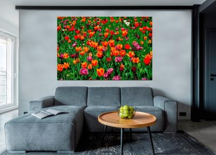 Cuadro campo de tulipanes (bpx0112)