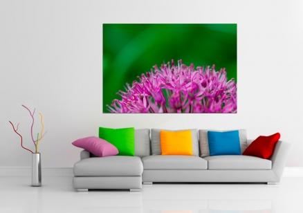Cuadro flor Grevillea (bpx0113)