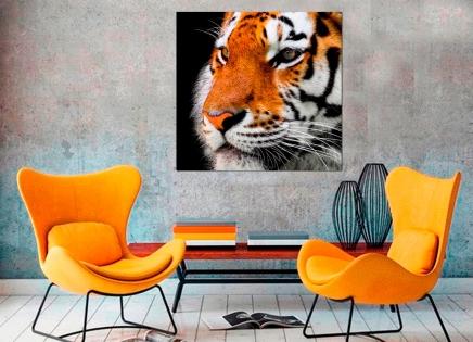 Cuadro tigre (bpx0201)