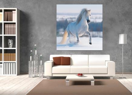 Cuadro caballo blanco (bfl39083700)