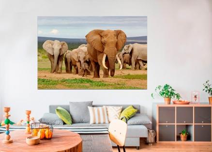 Cuadro elefantes (bfl47216205) b