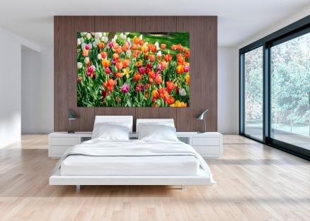 Cuadro campo de tulipanes (bfl83076857)