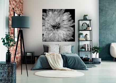Cuadro flor Dahlia (bgca0559)