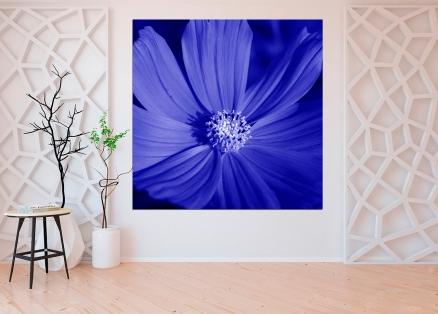 Cuadro flor azul (bgca0898)