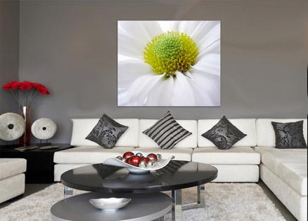 Cuadro margarita blanca (bme011802)