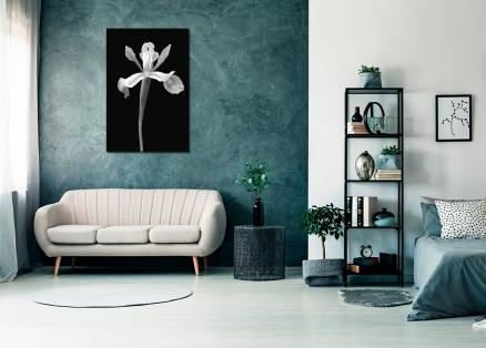 Cuadro flor blanco y negro (bme170049)