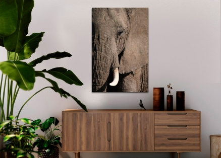 Cuadro elefante (bme180076)