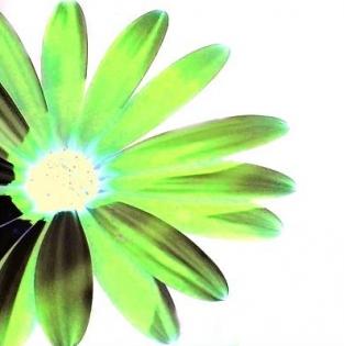 Cuadro flor verde (bept30)