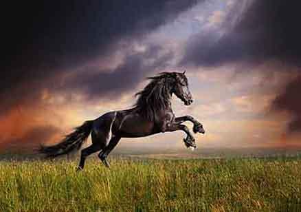 Cuadro caballo (bfl49946803)