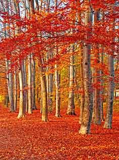 Cuadro paisaje otoño (bfl55728947)