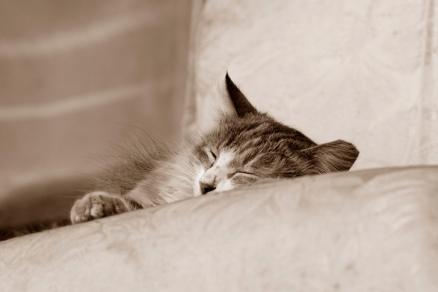 Cuadro gato durmiendo (bgca0200)
