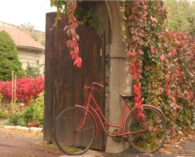 Cuadro bicicleta en la naturaleza (bgca0403)
