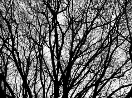 Cuadro arbol blanco y negro (bme160002)