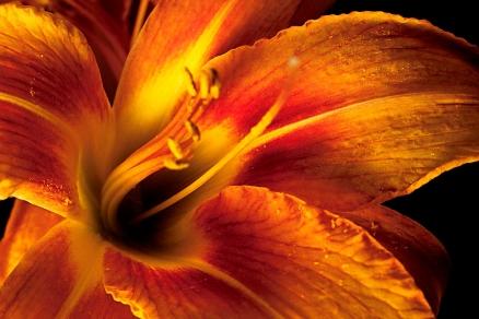 Cuadro detalle flor (bme160081)