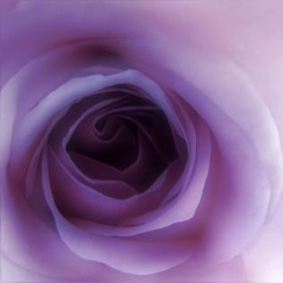 Cuadro flor fucsia (bme160092)