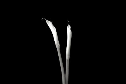 Cuadro fotografia blanco y negro (bme170048)