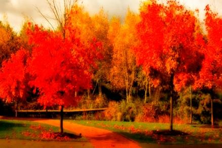 Cuadro paisaje arboles rojos (bme210024)