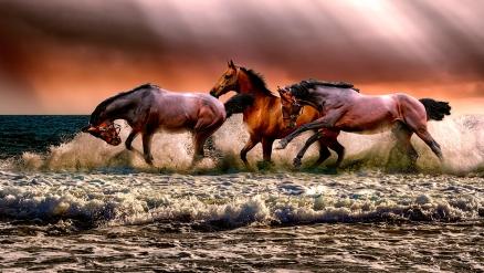 Cuadro caballos en la playa (bpx0205)