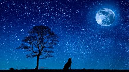 Cuadro el lobo y la luna (bpx0208)