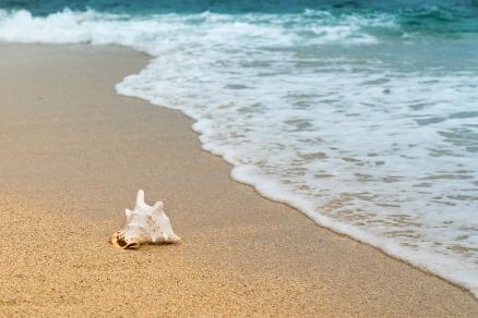 Cuadro caracola en la playa (bpx0304)