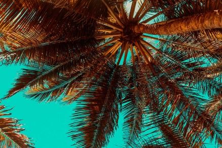 Cuadro bajo la palmera (bpx0349)