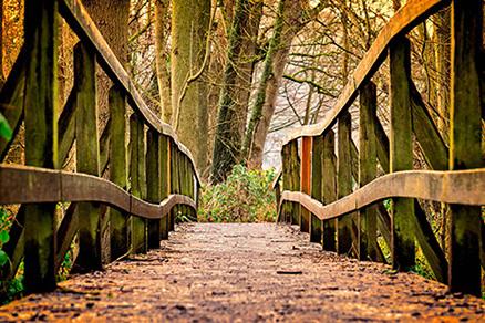 Cuadro camino en el bosque(bpx0301)